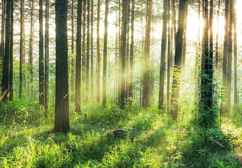 Wizard+Genius W+G vliesová fototapeta Západ slunce v lese 366x254 cm